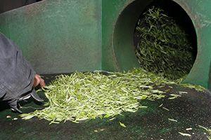Thé Vert torréfaction